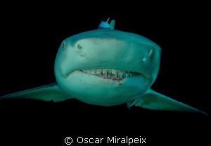Lemon Shark close up by Oscar Miralpeix 